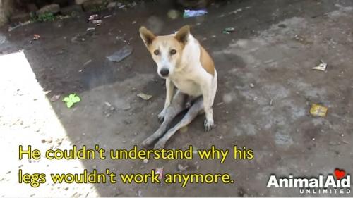 麻痺犬001