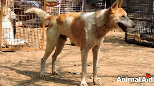 麻痺犬004