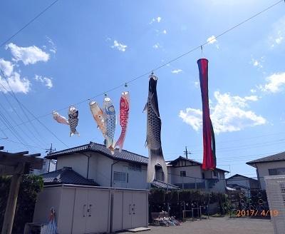 鯉のぼり1