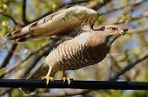 sbirds