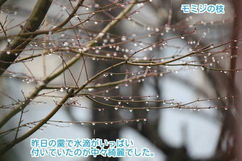 ⑧紅葉に水滴
