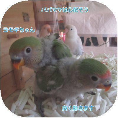 ④2羽の雛