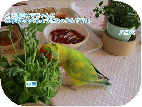 ②ミドは野菜も食べるよ