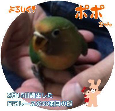 ⑤ぽぽちゃん