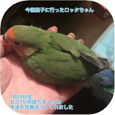 ③ロッタちゃん