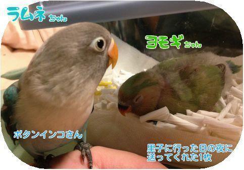④ヨモギちゃん