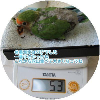⑤体重測定