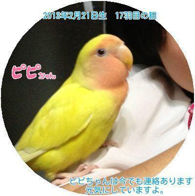 ④ピピちゃん