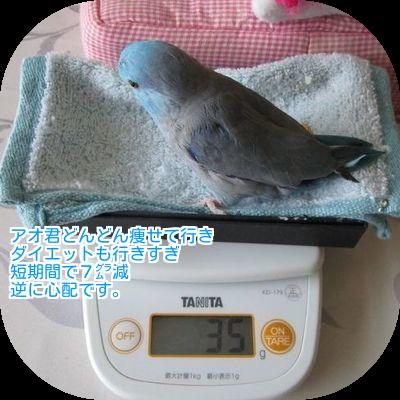 ④アオの体重