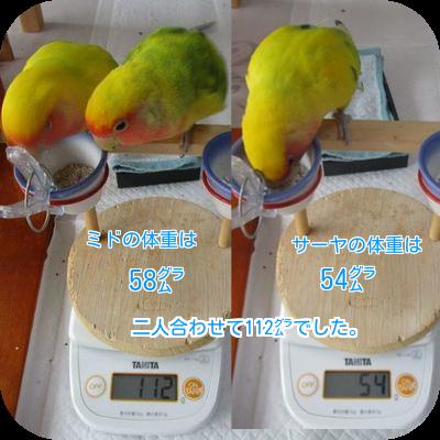 ⑧ミドサーヤの体重
