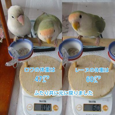 ⑨ロワレーヌの体重