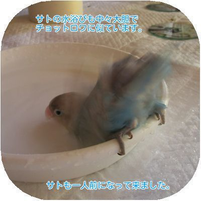 ⑥サトの水浴び