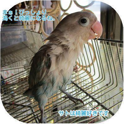⑦サト水浴び後