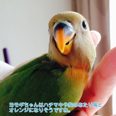 ③ヨモギちゃん