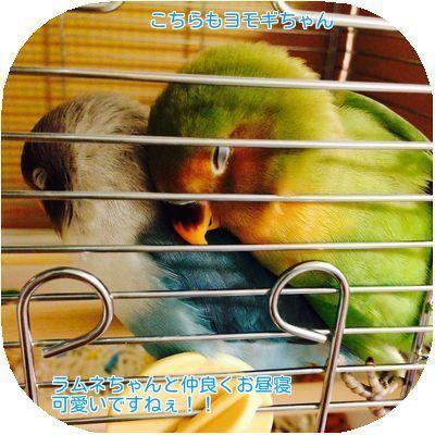④ヨモギちゃんお昼寝