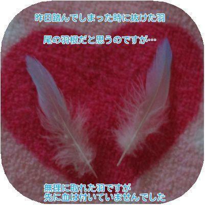 ④サトの羽根