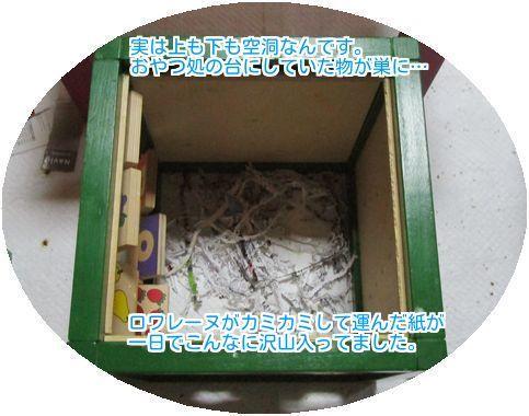 ⑧箱が巣に