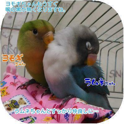 ④ヨモギラムネちゃん