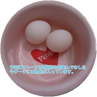 ⑥レーヌ卵