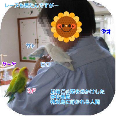 ①部長と鳥達