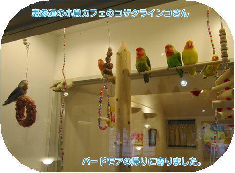 ⑤小鳥カフェ
