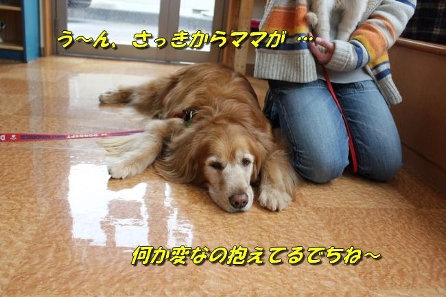 ライフ動物病院こももちゃん・プールハルちゃんふうちゃん 077