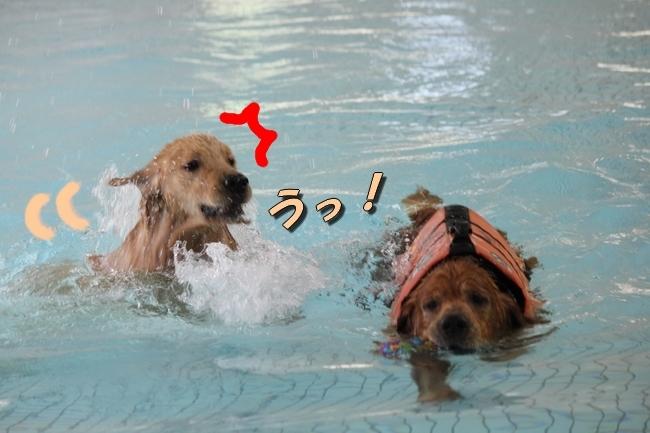 バディちゃんとレンちゃんとプール 074