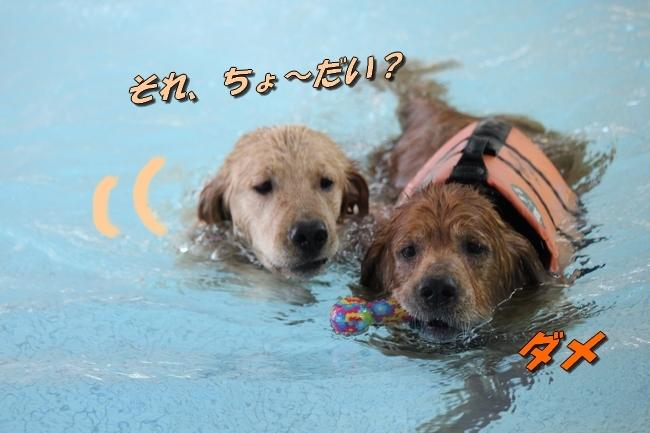 バディちゃんとレンちゃんとプール 077