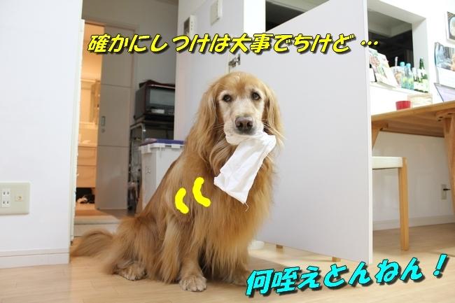 W杯最終予選 041