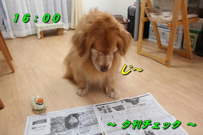 阪神新聞 010