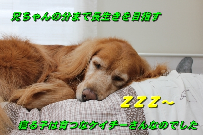ライフ動物病院こももちゃん・プールハルちゃんふうちゃん 009
