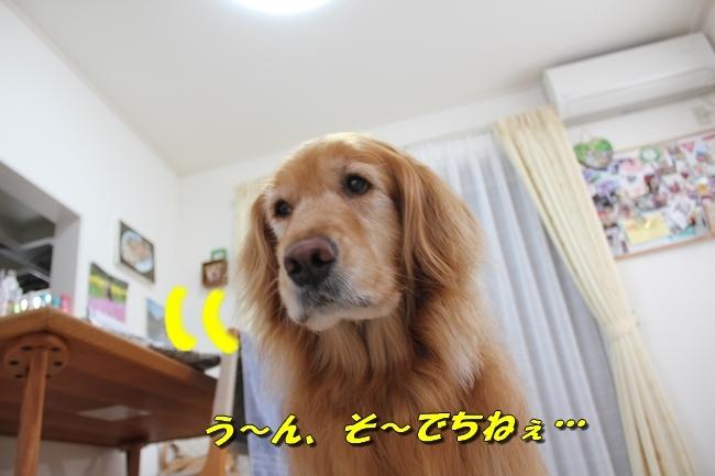 阪神新聞 026