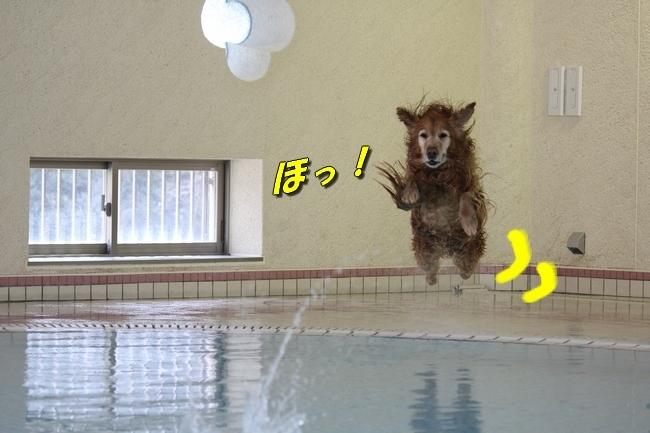 こなつ&さくらちゃん0322 301