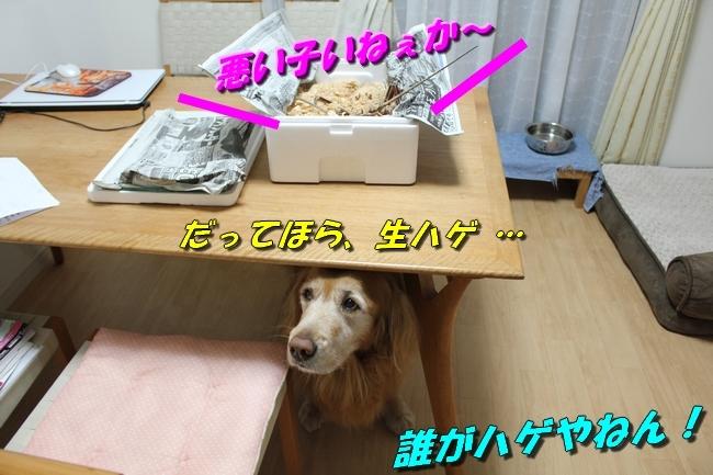 伊勢海老 014