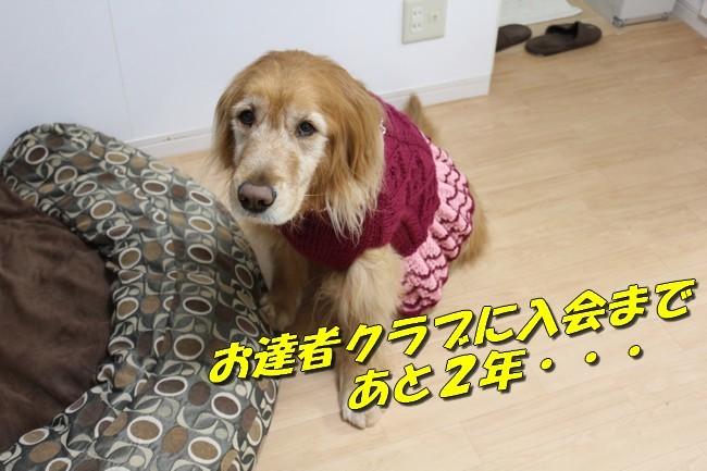 お達者クラブ制服 002