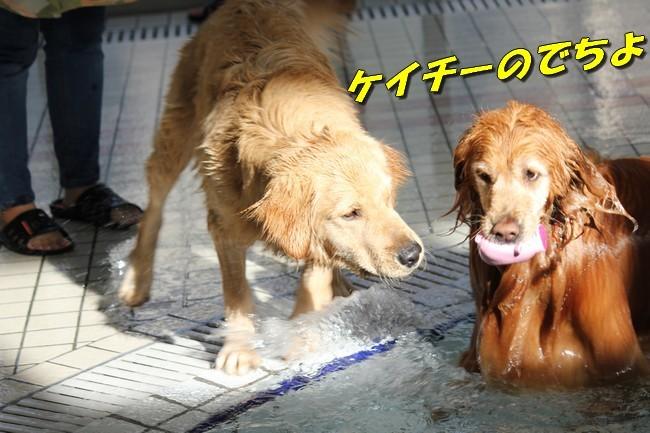 バディちゃんとレンちゃんとプール 038