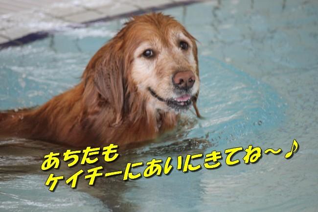 こなつ&さくらちゃん0322 237