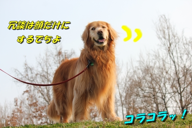 防災公園0330 017