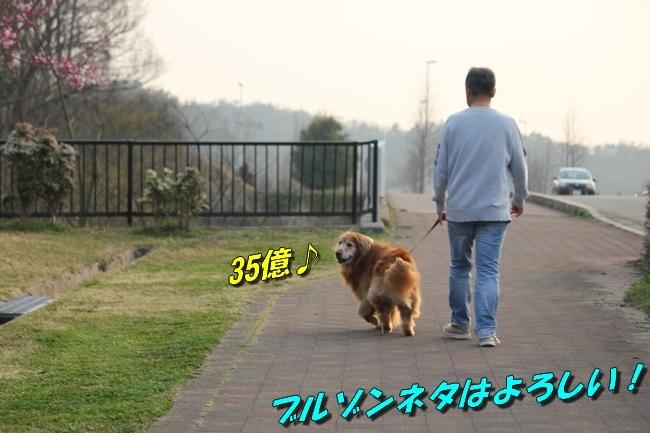 防災公園0330 142