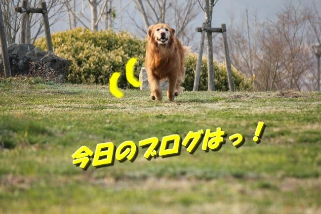 防災公園0330 037