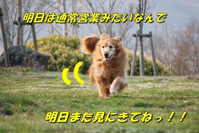 防災公園0330 040