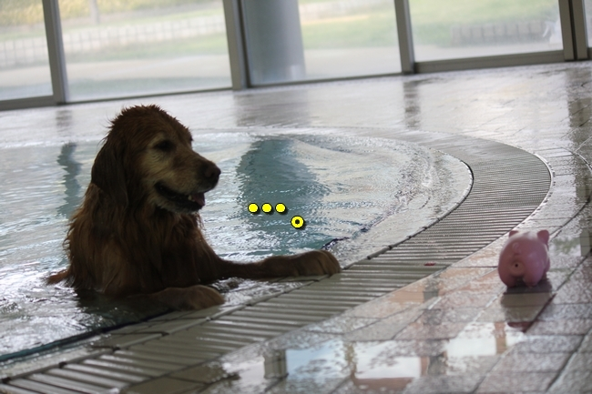 プールももちゃん4才 211