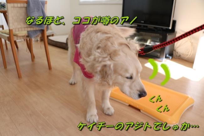 2_201704252341381bd.jpg