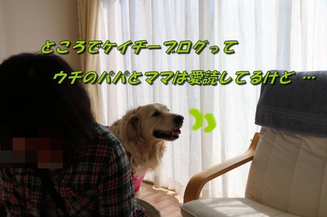 4_20170425234141be1.jpg