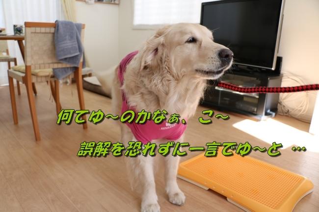 6_20170425234143baf.jpg