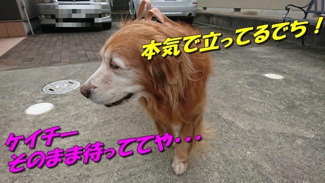 DSC_0272.jpg