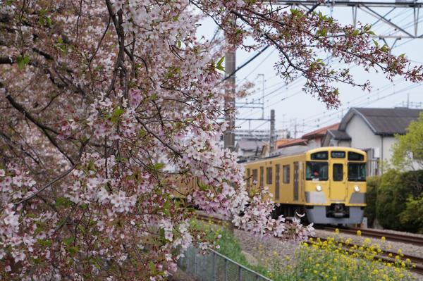 2017-04-15 桜×西武線1
