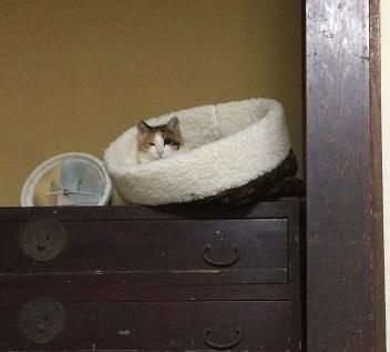 猫が思うように行かない件