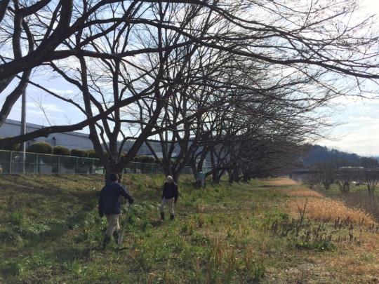 sakura_haisen2017_002.jpg
