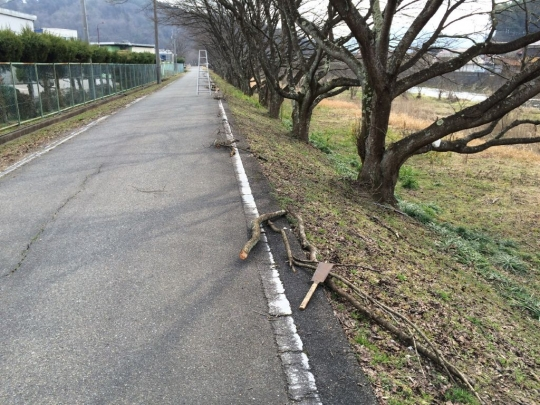 sakura_teire2017_005.jpg
